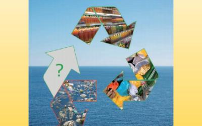 Packaging Plastics in Circular Economy